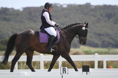 UPDATED DRESSAGE TESTS